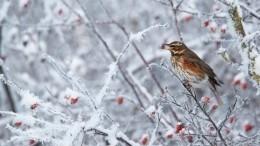 ВРоссию сегодня придут первые заморозки