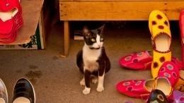 Видео: кот вСША каждую ночь ворует тапки повсему району