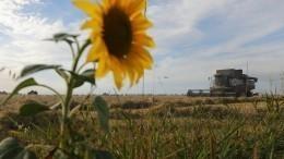 Путин указал насокращение сельхозпроизводства вРостовской области