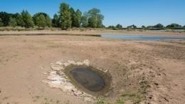 Куда утекла вода? НаКубани разразилась экологическая катастрофа— видео