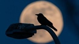 Сила Полнолуния. Каким знакам зодиака следует быть осторожнее 2сентября?