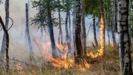 Лесные пожары подступают кнаселенным пунктам Ростовской области