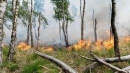 Губернатор Ростовской области доложил Матвиенко оситуации слесными пожарами