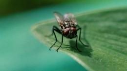 «Реветь хочется!»— мухи атаковали жителей поселка вЧелябинской области