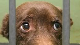 Пенсионерка изАлтайского края убивает иест собак, которых привозят вприют