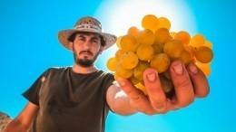 Как выбрать вкусный виноград— инструкция Роскачества