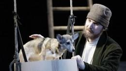 ВПетербурге спасают собачку, сыгравшую главную роль вспектакле «Му-му» вМДТ