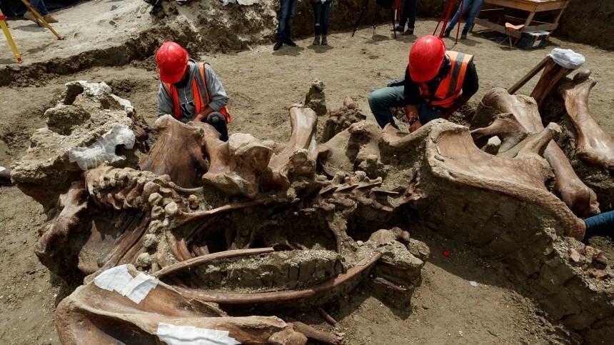 ВМехико обнаружили целое кладбище доисторических животных