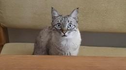 «Успокойся, подожди»: голодный кот-гипнотизер насмешил пользователей сети