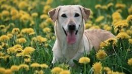 Тест: Какое домашнее животное вам завести?