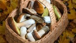 Опасность внутри: какие съедобные грибы нельзя собирать