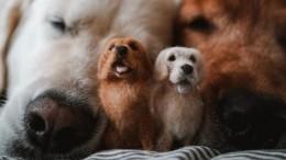 Фотогалерея: Мини-копии домашних животных извойлока