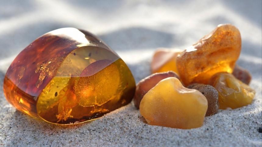 Гигантские сперматозоиды найдены вкусочке янтаря возрастом 100млн лет