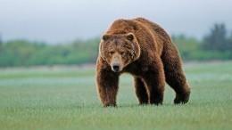 Находчивость водителя спасла детей отнападения медведя наКамчатке