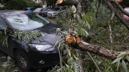 Деревья как снаряды: мощный ураган ударил поМоскве иПодмосковью