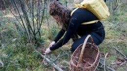 Грибное сафари: вглухих лесах гиды проводят необычные экскурсии