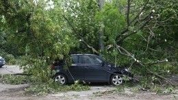 Пять человек пострадали из-за урагана вМоскве иПодмосковье