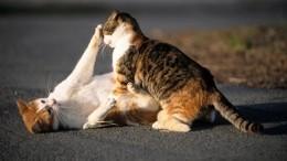 «Пушистые преступники»: Владельцев хищных котов требуют судить вНидерландах
