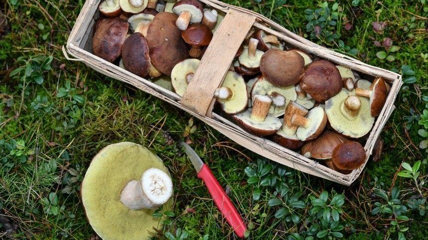 Как понять, естьли влесу грибы? Секреты удачной тихой охоты