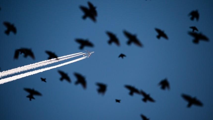 Самолет столкнулся состаей птиц при взлете вЕкатеринбурге