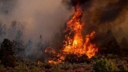 Видео: последствия пожара вНовороссийске нагоре Колдун