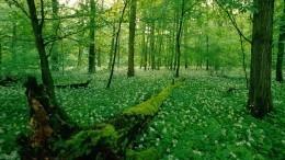 ВРоссии могут появиться частные лесные владения