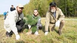 Акция «Сохраним лес» принесла 67 регионам России более семи миллионов деревьев