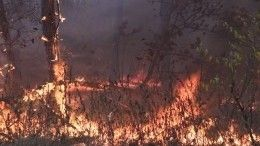 Масштабные пожары под Воронежем угрожают пяти населенным пунктам— видео