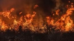 МЧС иавиация борются сприродными пожарами вВоронежской области