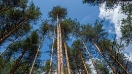 Депутат Николаев назвал три причины для пересмотра закона очастных лесах