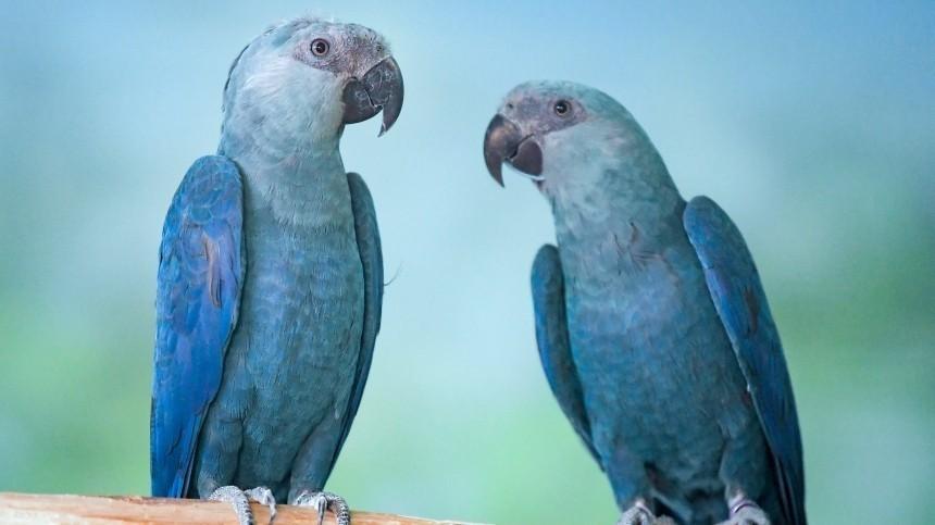 Попугаев-матерщинников спрятали отпосетителей британского зоопарка