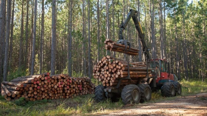 Путин поручил кабмину пресечь бесконтрольный вывоз необработанной древесины