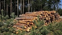 Путин поручил навести порядок влесной отрасли России