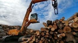 ВРоссии запретят экспорт необработанной древесины