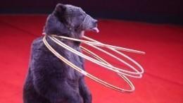 Медведь покусал мужчину иребенка вПодмосковье