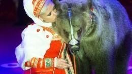Стали известны подробности нападения медведя налюдей вцирке вПодмосковье