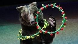 Дрессировщик рассказал осостоянии сына после нападения медведя вцирке