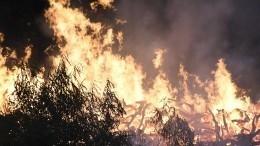 Каковы новые версии возникновения пожаров вВоронежской области