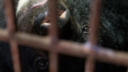 Умирающего отголода циркового медведя пытаются спасти вБашкирии