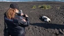 Губернатор Камчатки намерен объехать все загрязненные бухты— видео