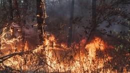 Кто высек искру? Вразрушительных пожарах под Воронежем подозревают поджигателей