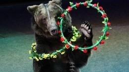 СКвозбудил уголовное дело пофакту нападения медведя насмотрителя цирка