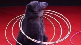 ВБольшом Московском цирке рассказали детали нападения медведя насотрудника