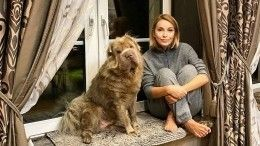 «Очередной приступ»: Орлова неможет вылечить любимого пса отлихорадки