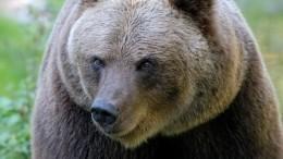 Подробности нападения бурого медведя наработника Большого Московского цирка