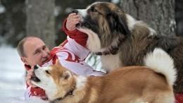 Лучшие друзья президентов: Как выглядят собаки лидеров государств?