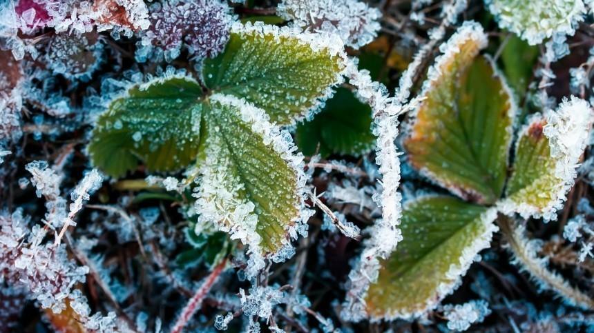 Российский ученый спрогнозировал глобальное похолодание