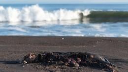 Как звезды соцсетей превратили гибель морских животных наКамчатке вповод для хайпа