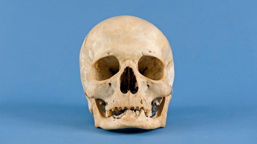 ВЛенобласти обнаружили расчлененный скелет человека