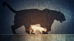 Вгорах Перу найден невероятно огромный древний кот— фото